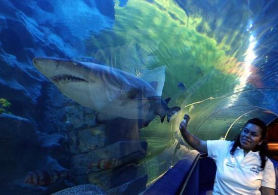 Grootste aquarium van Europa in Istanbul