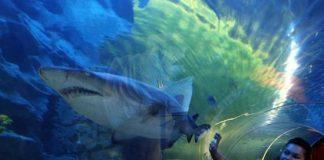 Turkuazoo Aquarium Istanbul