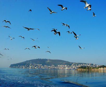 Meeuwen vanaf de Ferryboot