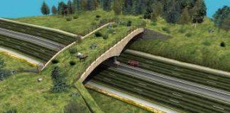 Istanbul gaat ecologische bruggen bouwen voor wilde dieren