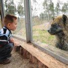 Hyena in Izmir Dogal Yasam Parki