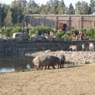 Nijlpaard Zebra in Izmir Dogal Yasam Parki