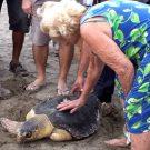 Kaptan June bij het vrijlaten van een gerehabiliteerde schildpad