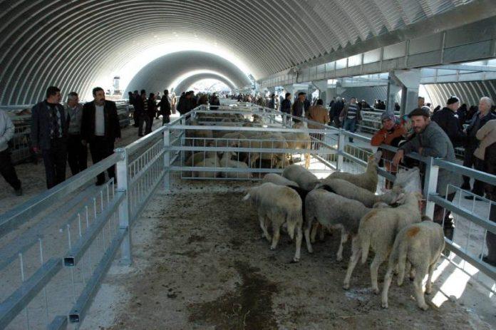 Grootste veemarkt klaar voor het offerfeest